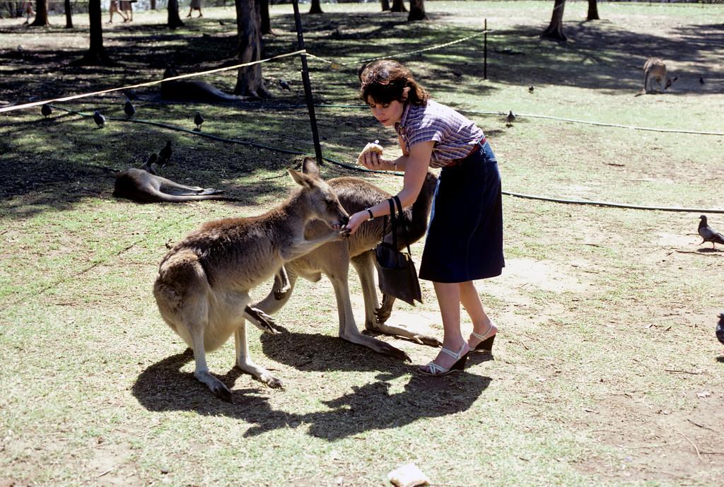 Australia-Brisbane-Hayman_Island-042