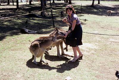 Australia-Brisbane-Hayman_Island-035