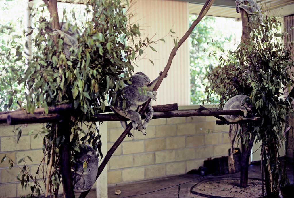Australia-Brisbane-Hayman_Island-031