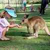 026 Lone Pine Sanctuary, Brisbane