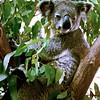 017 Lone Pine Sanctuary, Brisbane