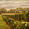 Melbourne Winery 009 TTE Chamoiseee