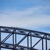 Sydney  014