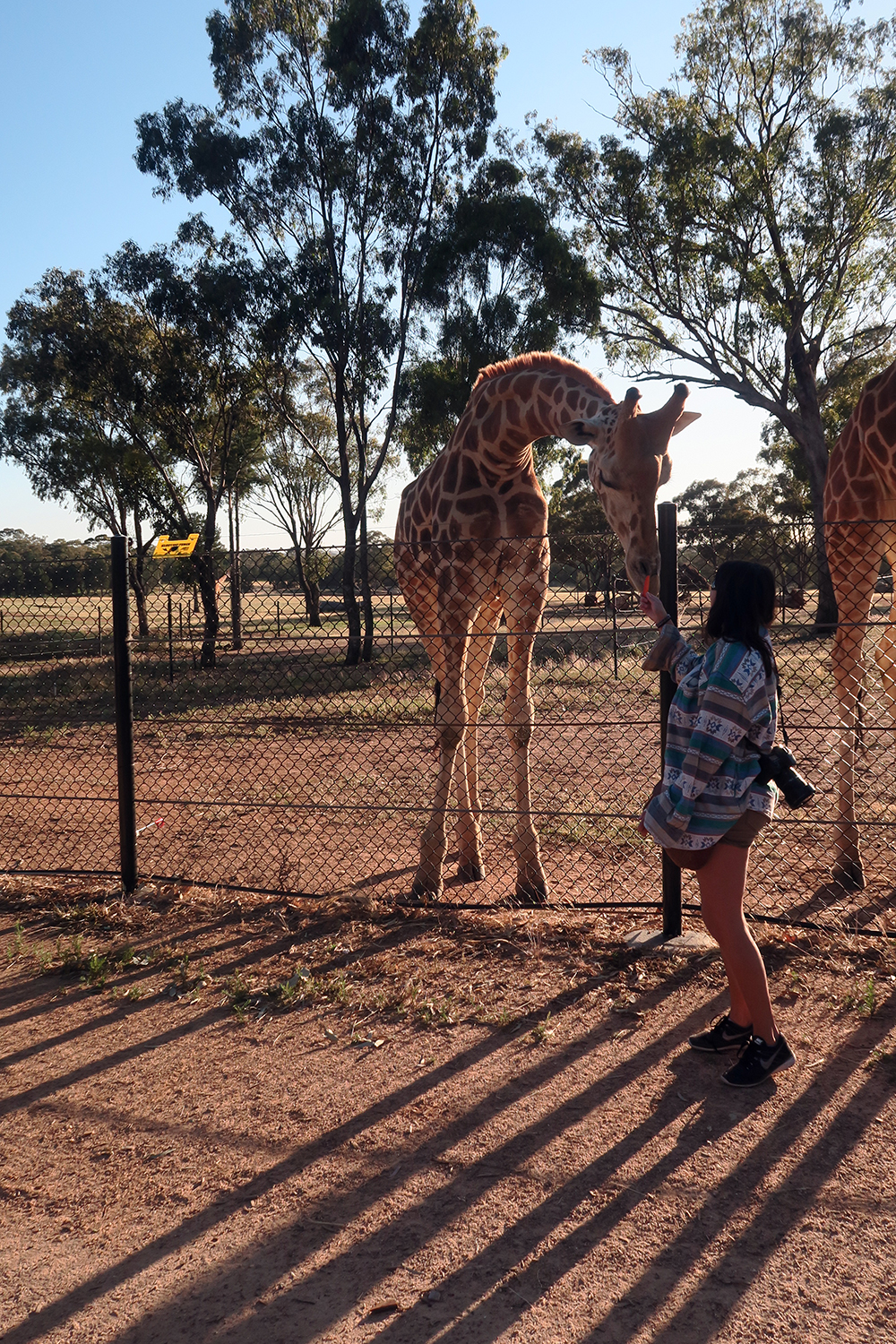 taronga-western-plains-zoo