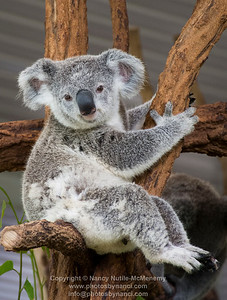 Brisbane-Koalas, Rain forest, Waterfalls, Springsteen and more...