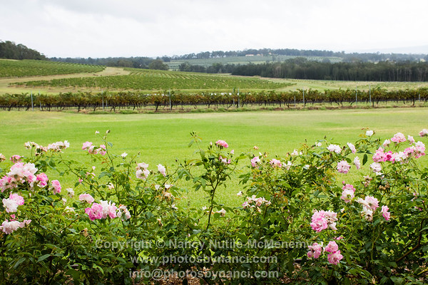 Hunter Valley Wine Tasting Tour