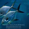 Sea Life Aquarium Sydney