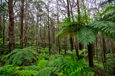 South East Forest National park