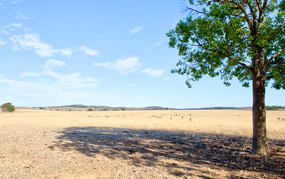 Bathurst to Wagga