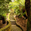 Pathway throught a fern garden