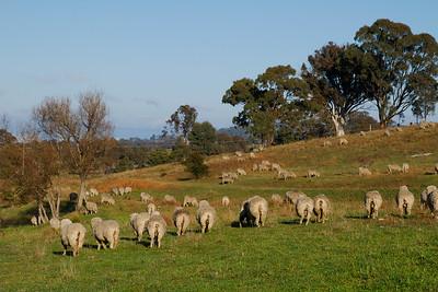 Sheep Bottoms!!!