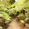 Soft tree ferns