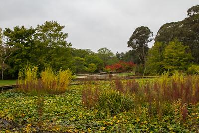 Autumn in Canberra