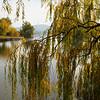 Autumn colours, Canberra