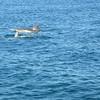 Snorkeling Ningaloo Reef - Exmouth, Australia