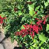 Botanic Gardens - Geelong, Australia