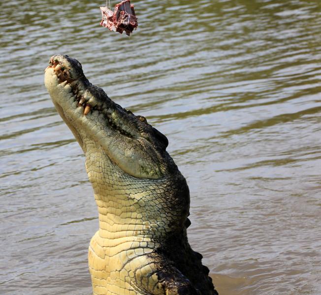 Jumping Crocodile Cruise- Adelaide River - Darwin, Australia