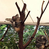 Lone Pine Koala Sanctuary - Brisbane, Australia