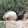 Seal Bay - Kangaroo Island, Australia