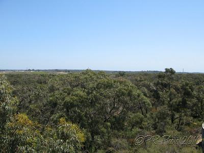Australia Garden 21st Nov 2010