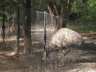 Healsville Sanctuary 18th June 2010