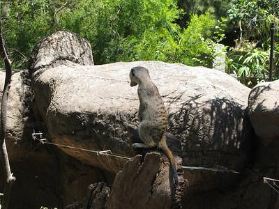 Melbourne Zoo 31-12-2012