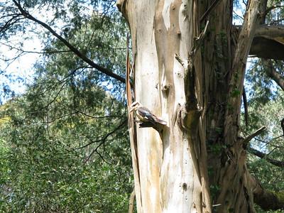 Sculpture Park 04-11-2012