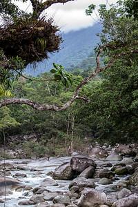 Mossman Gorge, Queensland, Australia.