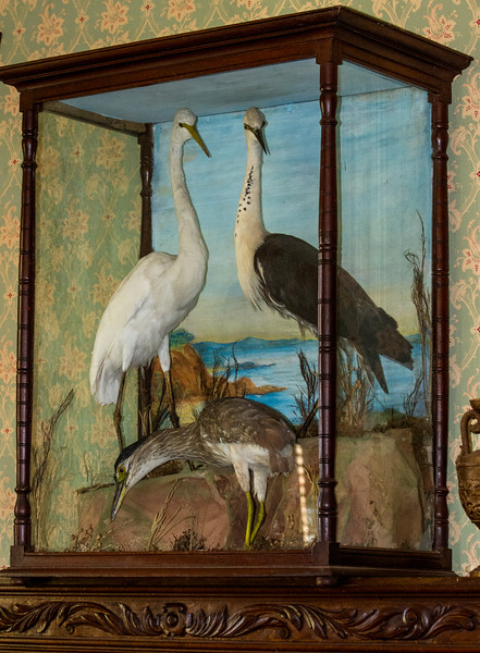 Display case at Churchill Farm house, Phillip Island, Australia