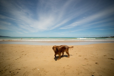 Apollo Bay Beach-22.jpg