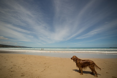 Apollo Bay Beach-19.jpg