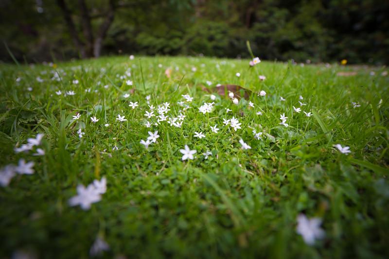 Garden photos-49.jpg