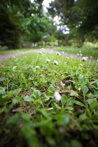 Garden photos-2.jpg