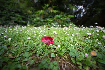 Garden photos-52.jpg