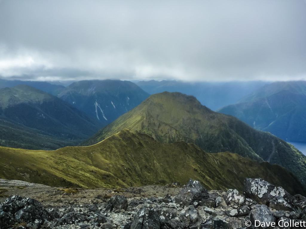 Forward Peak
