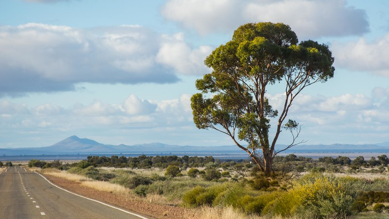 We left the Murray River area and started heading further north, and out into the open country.