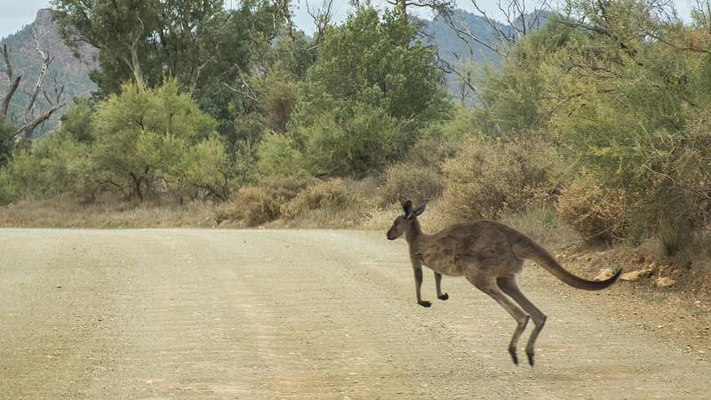 and a kangaroo kept us company for awhile.
