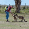 The kangaroos, on the other hand, were gentle, lots of fun and happy to be fed.