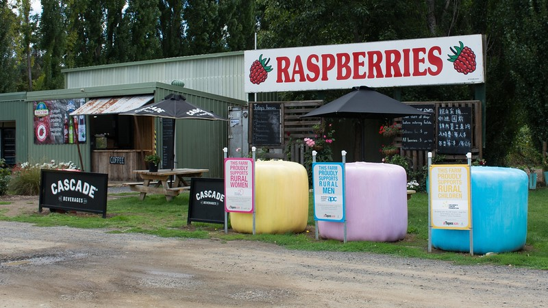 Not long after we started wandering Tasmania, we found mecca -- the fruit growing areas of the state.  We came through here more than once, and found all the fruit terrific.  Take note of the signs on the bales of hay!