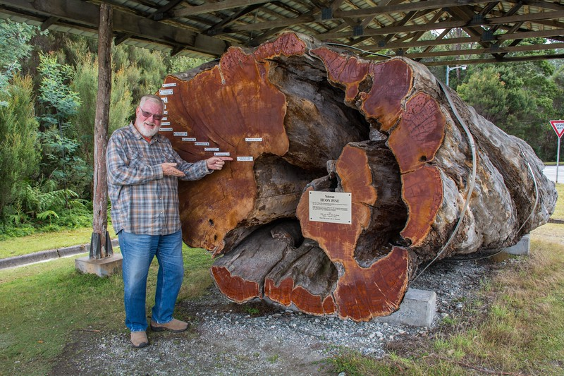 we ended up near Strathgordon, where there was this nifty exhibit of an ancient Huon tree; it had been salvaged in 1975, when it was already 2200 years old.  The beautiful wood of these trees makes lovely furniture.