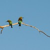 The first sight was these great, flashy birds;