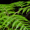 As always, the forest ferns put on quite a show.
