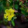 wildflowers were numerous,