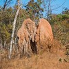 Cathedral termite mounds standing and chatting.
