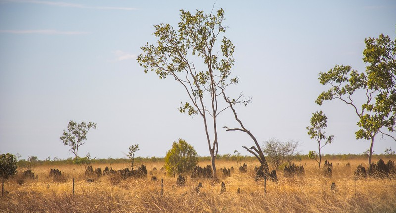 We hope you will enjoy our collection of termite mound pictures.  Rick has interspersed them with the rest of the photos, so don't miss any!