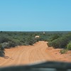 Driving up into Cape Peron, we were enjoying the views, but not at all delighted with the damage done to the truck.