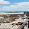 At Hamelin Pool we were able to check out the stromatolites...