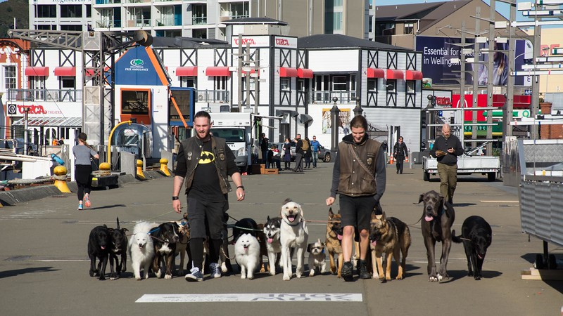 We return to Wellington, New Zealand's capital and said to be one of the world's most livable cities.  No arguments from this group.