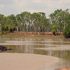 Au 2366 Keep River NP, Cockatoo Lagoon met Australian Pelican