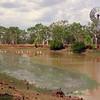 Au 2369 Keep River NP, Cockatoo Lagoon met Australian Pelica